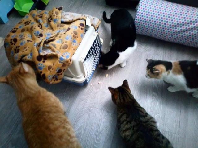 De katten van Cristina  3612