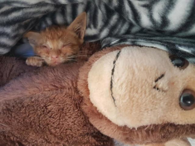 RIP kleine kitten 36534310