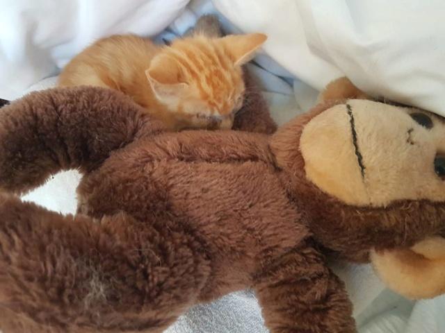 RIP kleine kitten 36563410
