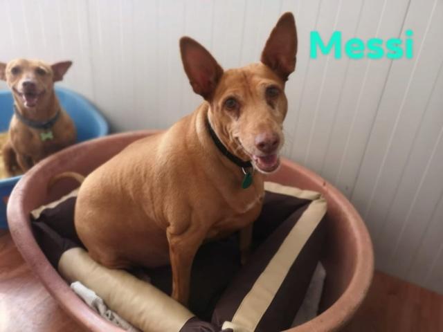 CA Messi 375