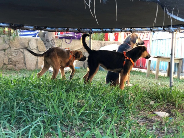3 honden gered 3810