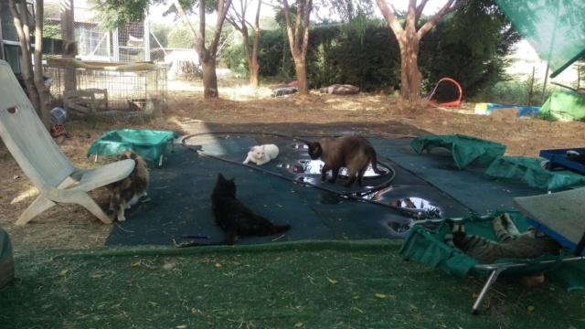 5 aug. - Een waterbed voor de katten van Villa Felis 38462810