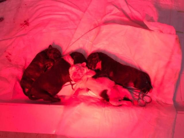 Frida zwanger achtergelaten bij de poort van Canis y Felis 391