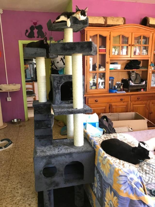 Krabpalen voor Canis y Felis - Blije katten 3911
