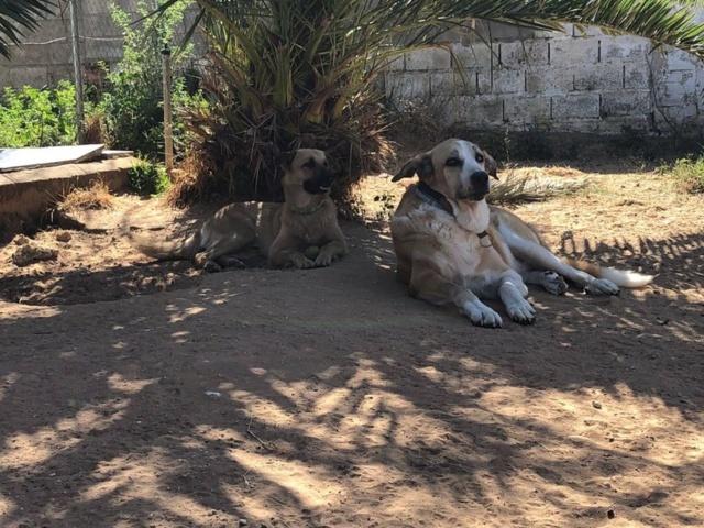 Canis Thor(Gedeeltelijke adoptie) 39751010