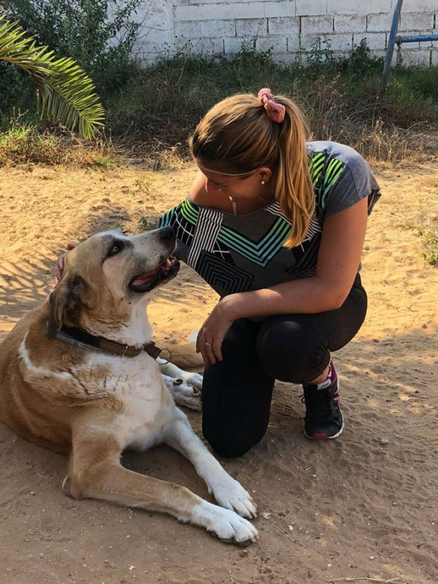 Canis Thor(Gedeeltelijke adoptie) 39799610