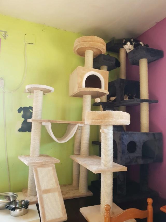 Krabpalen voor Canis y Felis - Blije katten 4013
