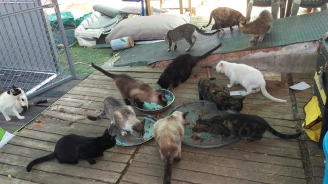 Kattenvoer en krabpalen etc gevraagd  40330111