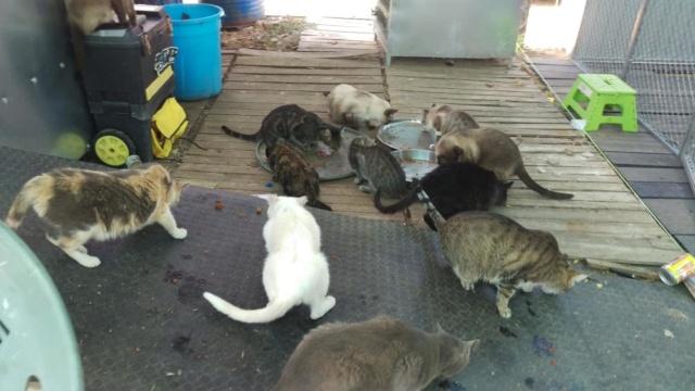 Kattenvoer en krabpalen etc gevraagd  40330311