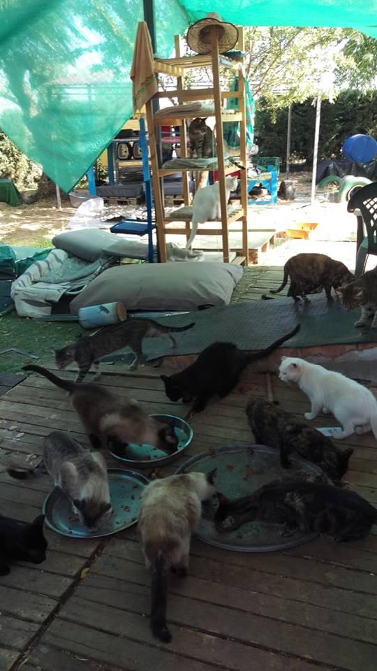 Kattenvoer en krabpalen etc gevraagd  40361811
