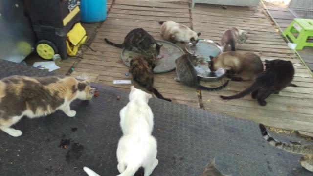Kattenvoer en krabpalen etc gevraagd  40374911