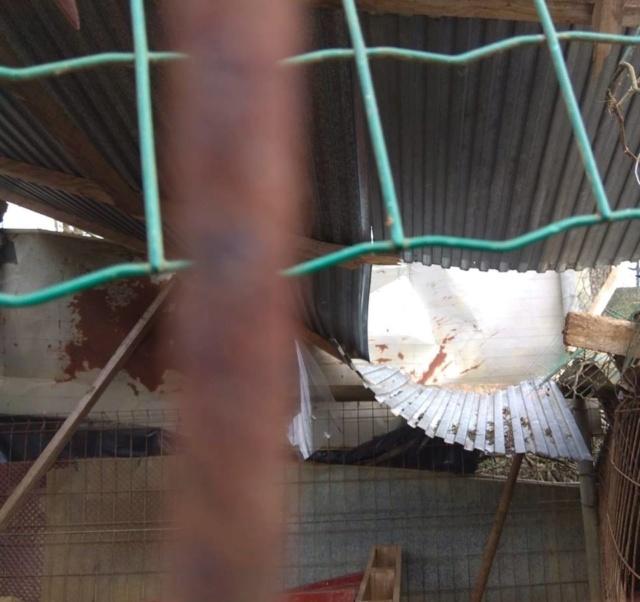 50% actie - Nieuwe kennels voor de honden van Masquechuchos 41287710