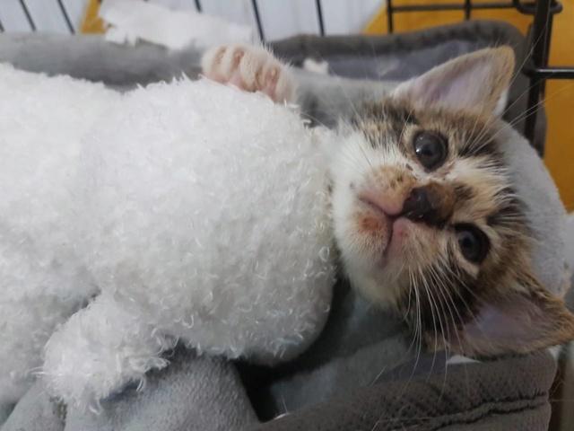 Kitten gevonden in kartonnen doos 41295310