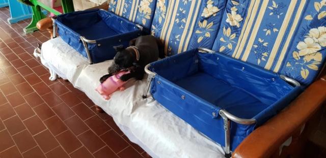 3 pallets aangekomen bij Canis y Felis 41500210
