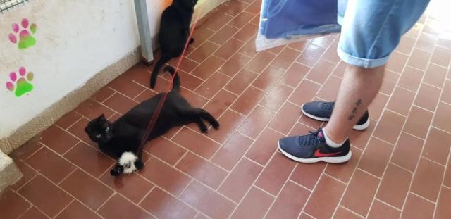 3 pallets aangekomen bij Canis y Felis 41501510