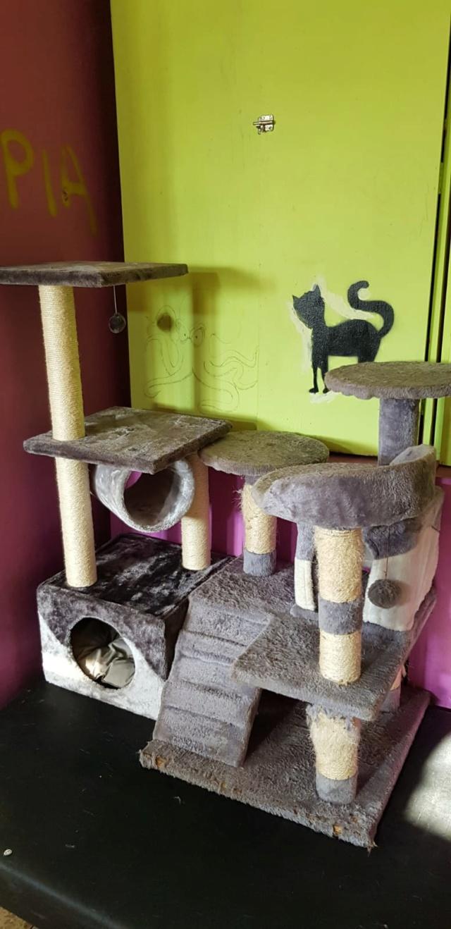 Krabpalen voor Canis y Felis - Blije katten 4212