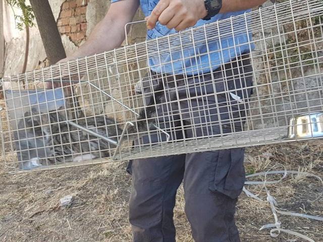 juli - Met gedoneerde vangkooi kitten gevangen 424