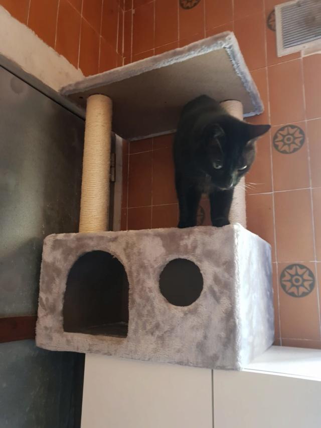 Krabpalen voor Canis y Felis - Blije katten 4311