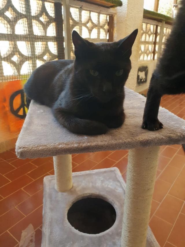 Krabpalen voor Canis y Felis - Blije katten 4414