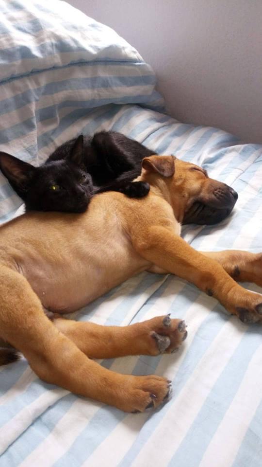 Pups Baloo en Mika uit de perrera gehaald 44855410