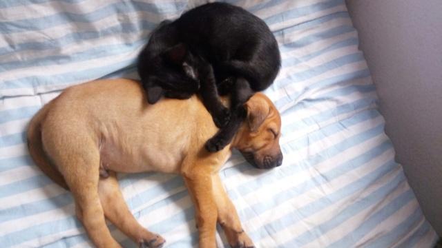Pups Baloo en Mika uit de perrera gehaald 44865310
