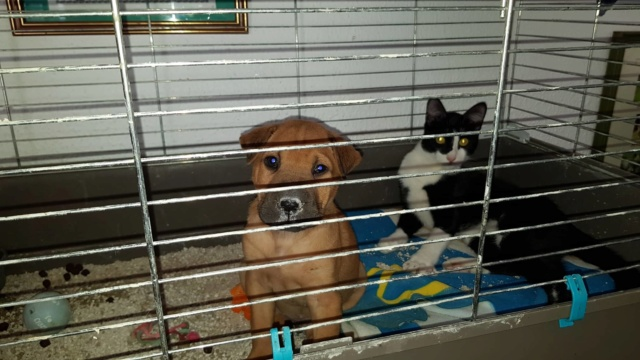 Pups Baloo en Mika uit de perrera gehaald 44929110