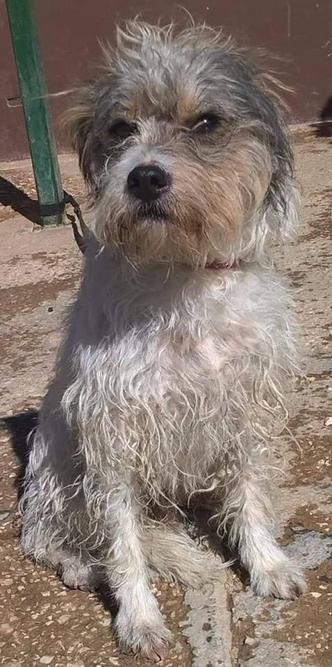 Nog 3 honden uit de perrera gered 45254711