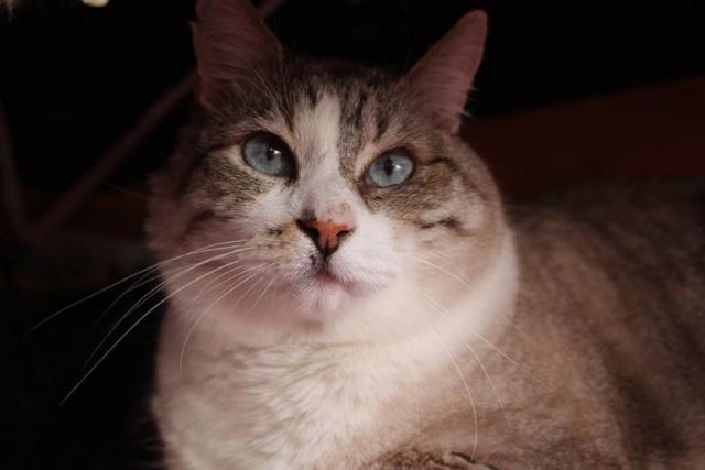 De katten van Cristina  457
