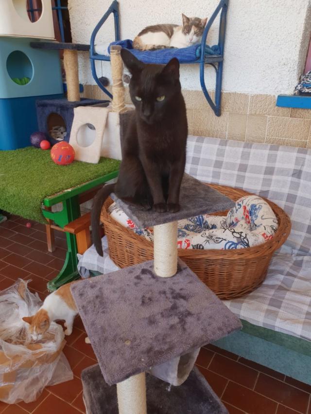 Krabpalen voor Canis y Felis - Blije katten 4613