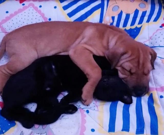 Pups Baloo en Mika uit de perrera gehaald 46372510