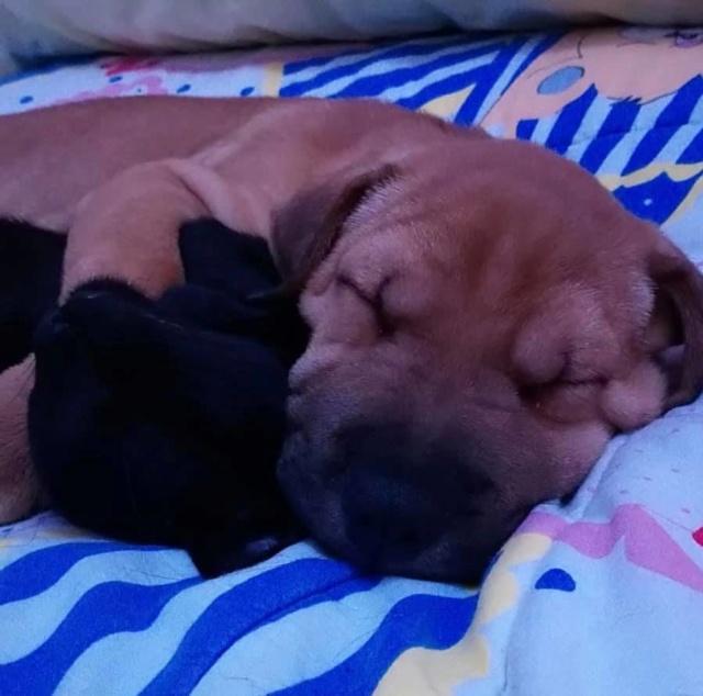 Pups Baloo en Mika uit de perrera gehaald 46406210