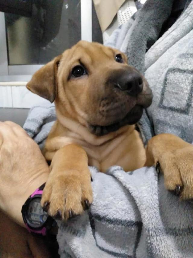 Pups Baloo en Mika uit de perrera gehaald 46493710