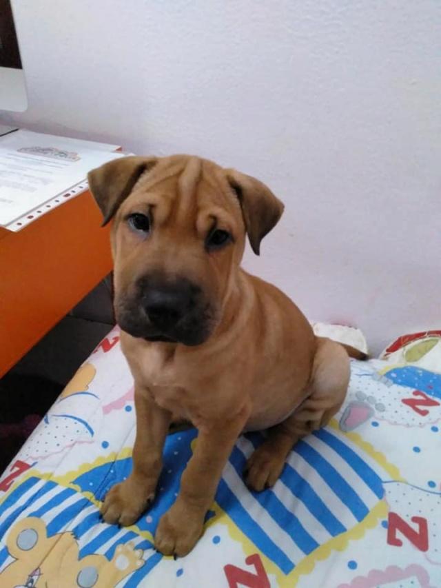 Pups Baloo en Mika uit de perrera gehaald 46792310
