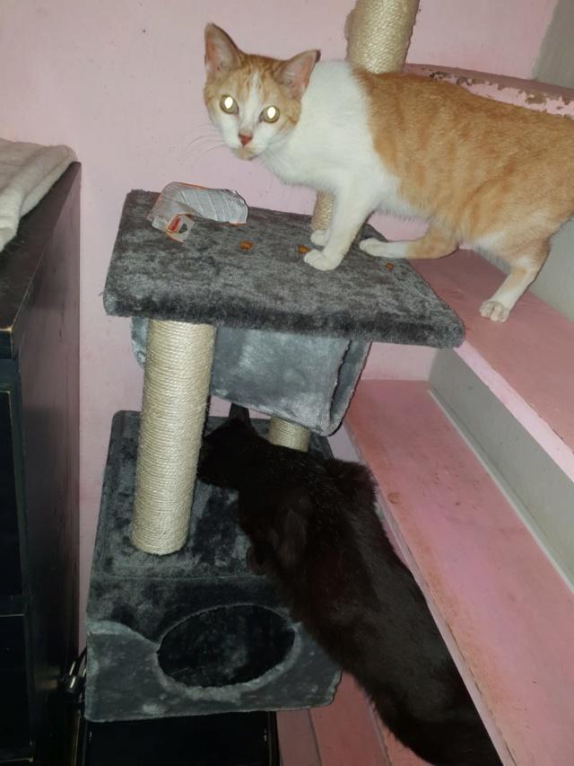 Krabpalen voor Canis y Felis - Blije katten 4711