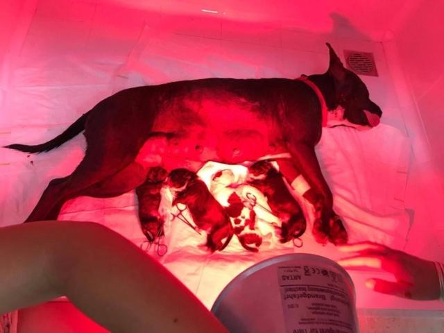 Frida zwanger achtergelaten bij de poort van Canis y Felis 480