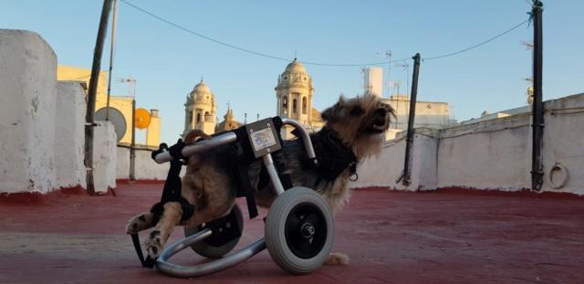 Een rolstoel voor Kika 4c229810