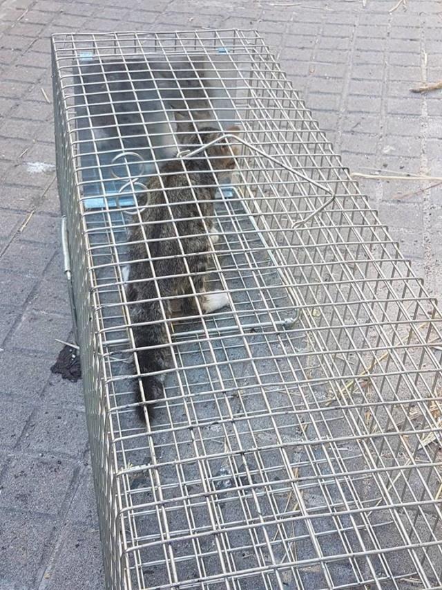 juli - Met gedoneerde vangkooi kitten gevangen 521