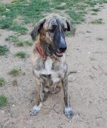 CA Nana (Gedeeltelijke adoptie) 54432710