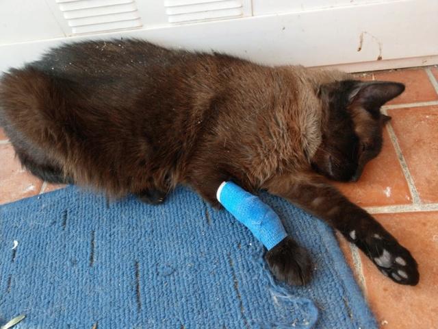 VF - Pany (kitten, doof en grotendeels blind) 54798710