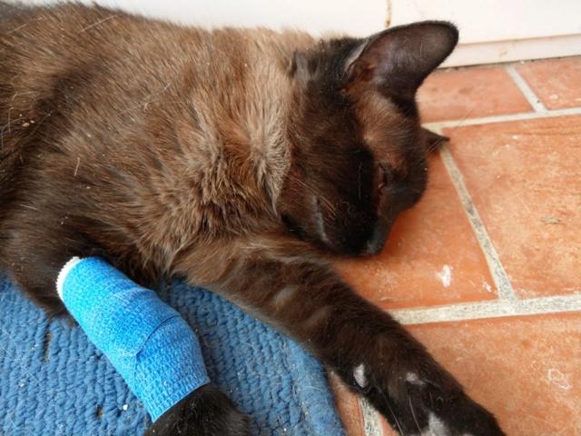 VF - Pany (kitten, doof en grotendeels blind) 55471810