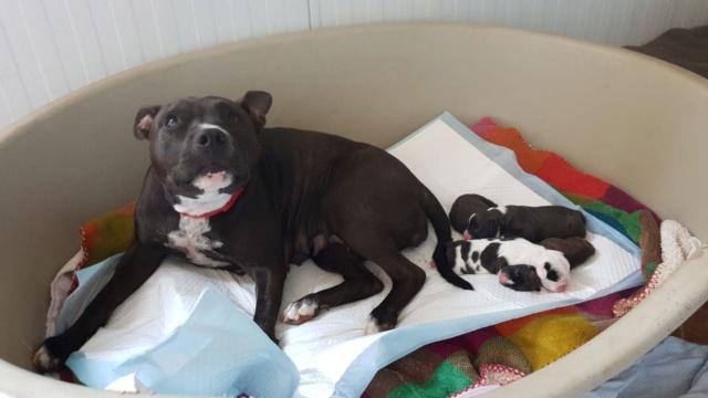 Frida zwanger achtergelaten bij de poort van Canis y Felis 571