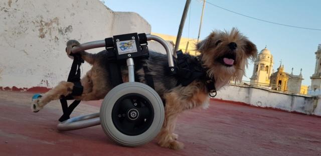 Een rolstoel voor Kika 5c07c210