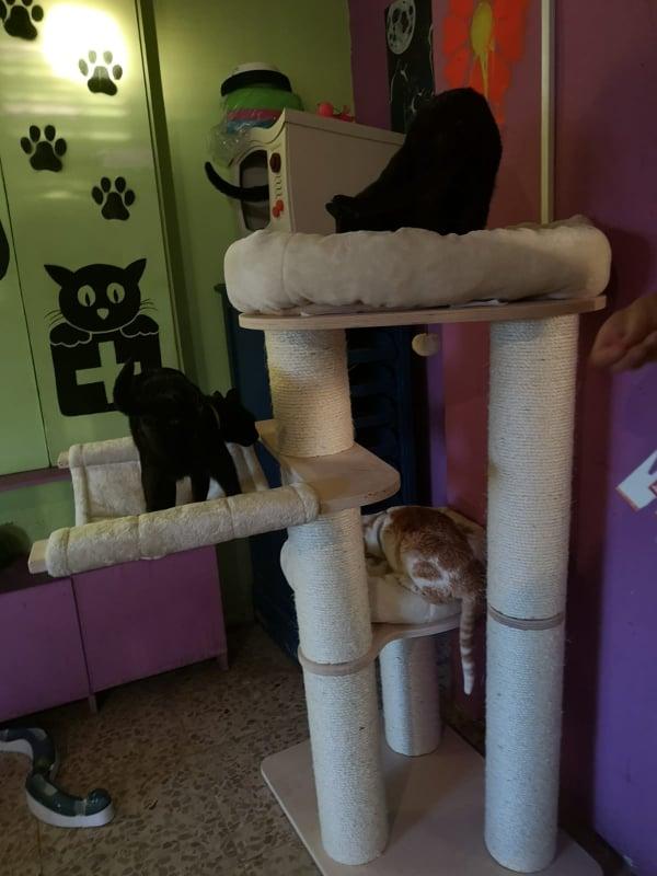 2 pallets voor Canis y Felis - 22 mei 61563210
