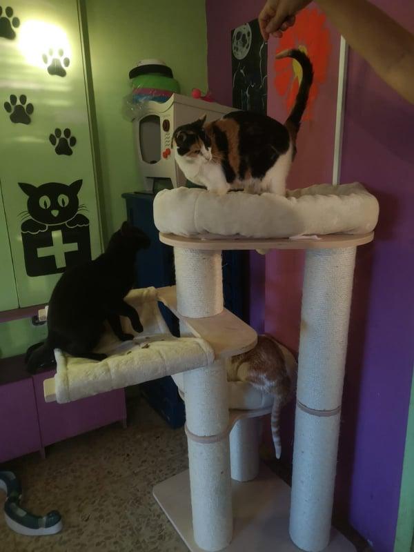 2 pallets voor Canis y Felis - 22 mei 61604410