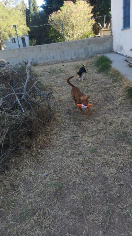 2 pallets voor Canis y Felis - 22 mei 61681510