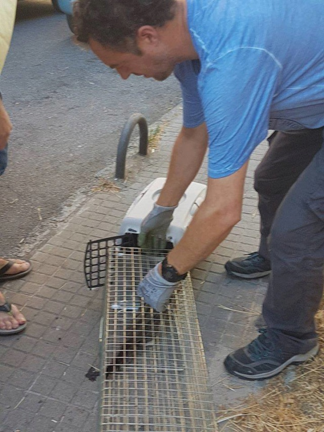 juli - Met gedoneerde vangkooi kitten gevangen 618