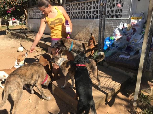 2 pallets voor Canis y Felis - 22 mei 61998310