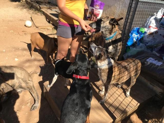 2 pallets voor Canis y Felis - 22 mei 62136710