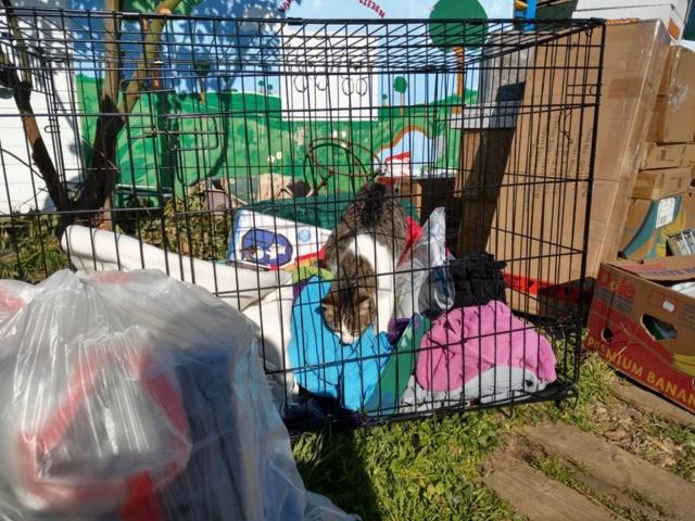 6 jan, ook de 2 pallets zijn aangekomen bij Villa Felis 6411