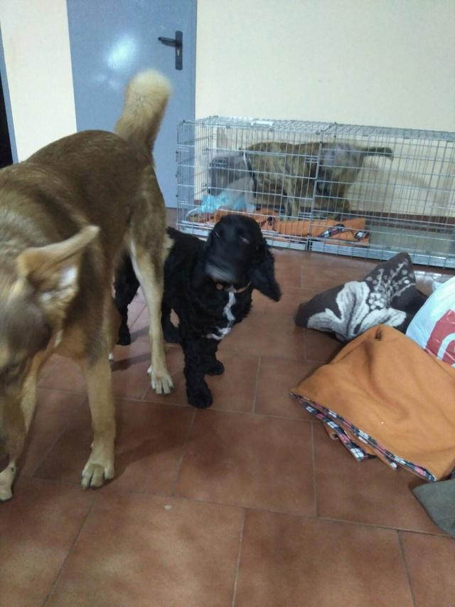 MC  Bosé - Hond aangereden 64e46b10